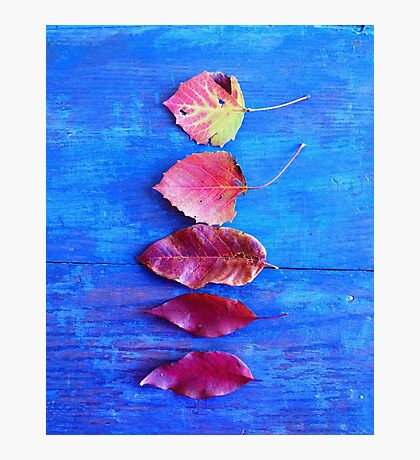 Autumn Leaves on Blue Vintage Table Photographic Print