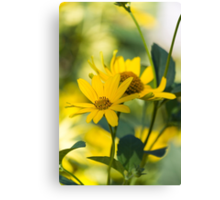 yellow flower in spring Canvas Print
