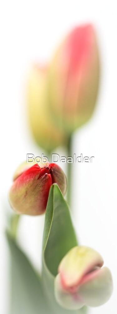 Fresh Tulips... (vertical) by Bob Daalder