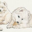 Samoyed Puppies by BarbBarcikKeith