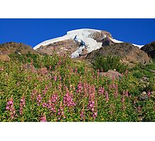 Mount Baker over pink flowers on Heliotrope RIdge Photographic Print
