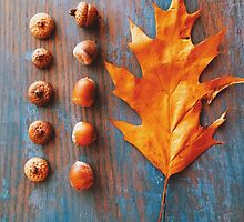 Oak Leaf and Acorns on Blue Vintage Table by Olivia Joy StClaire