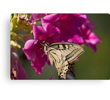 butterflies on the flower Canvas Print