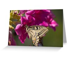 butterflies on the flower Greeting Card