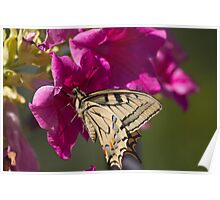 butterflies on the flower Poster