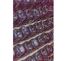 wine bottles in the cellar Photographic Print