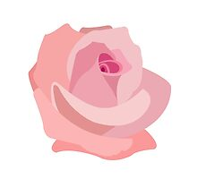 Pink Rose Illustration on White by NataliePaskell