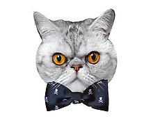Mr Eggs the Cat is Ready for His Date Photographic Print