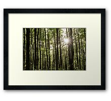 His Forest Framed Print