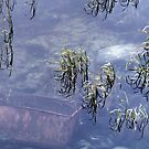 17.10.2014: Water Filled Quarry by Petri Volanen