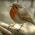 Robin by Thea 65