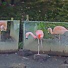 Ballet De Flamingo by CreativeEm