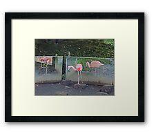 Ballet De Flamingo Framed Print