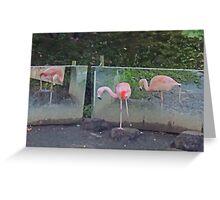 Ballet De Flamingo Greeting Card