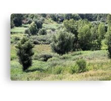 River bed of shoaled Canvas Print