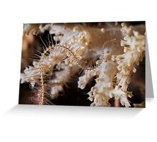 Brittle stars or ophiuroids on a coral reef.  Greeting Card