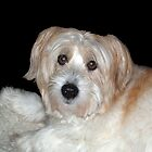 Molly....  my best friend.... died 7-8-13 by BCallahan