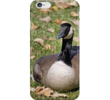 Canadian Goose Sitting iPhone Case/Skin