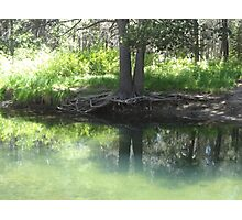 Reflections on a Summer Pond Photographic Print