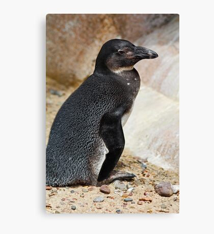Penguin Posing Canvas Print
