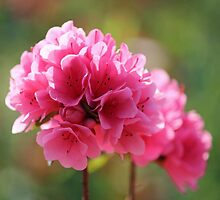 Pink Is The Color by Cynthia48