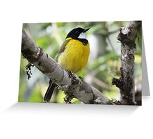 Golden Whistler Greeting Card