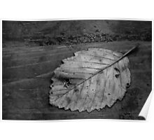 Leaf on Wood Poster