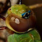 Green Darner #1  by Kane Slater