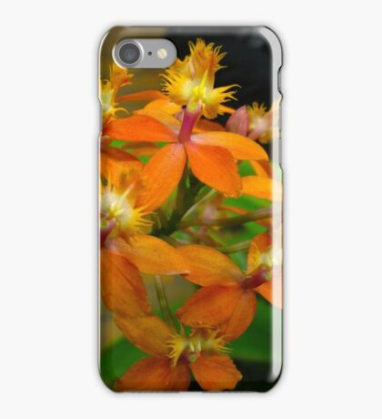 All about Orchids iPhone Case/Skin