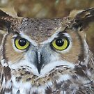 Owl by Valerie Simms