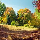 Autumn Foliage, New England by Alberto  DeJesus