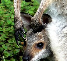 Joey and the Claws that Protect by Graeme  Hyde