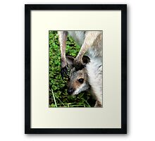 Joey and the Claws that Protect Framed Print