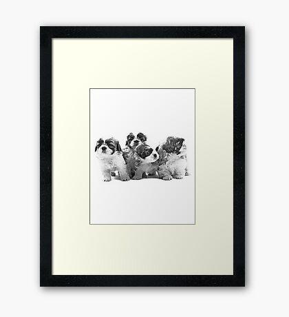 Shih Tzu Dog Image Framed Print