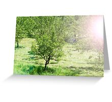Beautiful green park with the fruit trees. Sunny summer day Greeting Card