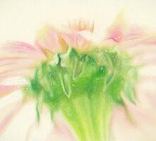 Pastel Pink Zinnia by Lois  Bryan