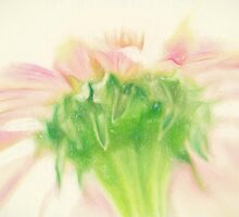 Pastel Pink Zinnia by Lois  Bryan