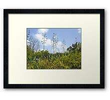 In the Think of the River of Grass Framed Print