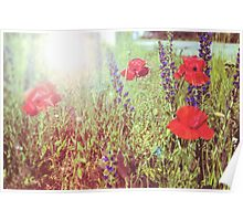 Flower background. Vintage background of red wild poppies and grass Poster