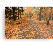 Pavement with leaves Metal Print
