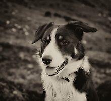 The world's friendliest sheep dog by deepestdeepblue