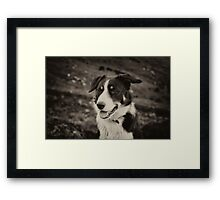The world's friendliest sheep dog Framed Print