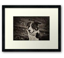 The world's friendliest sheep dog Framed Print