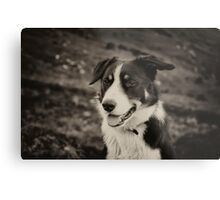 The world's friendliest sheep dog Metal Print