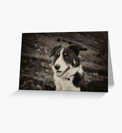 The world's friendliest sheep dog Greeting Card