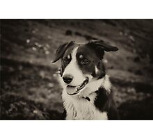 The world's friendliest sheep dog Photographic Print