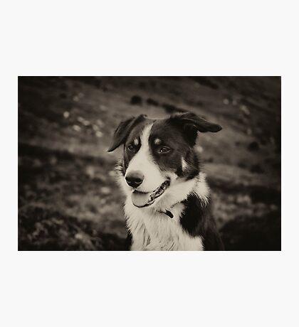 The world's friendliest sheep dog Photographic Print