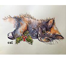 Christmas cat. Elizabeth Moore Golding 2014© Photographic Print