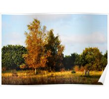 Silver birches Poster