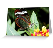 Glasswing Butterfly on Santana Greeting Card